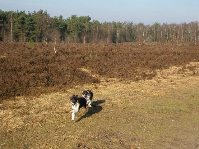 Hondenforum het leesten 11 gelderland 6 spots HondenFan de website ...